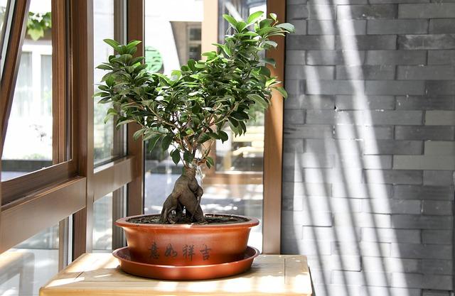 Ogrodowe drzewko bonsai